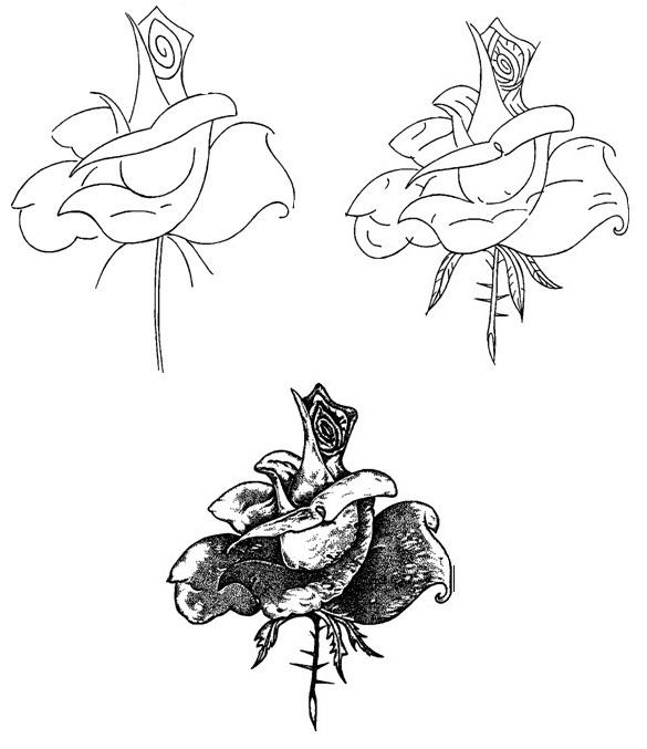 Как рсиовать розу