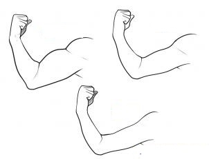 how-to-draw-a-muscle-step-3