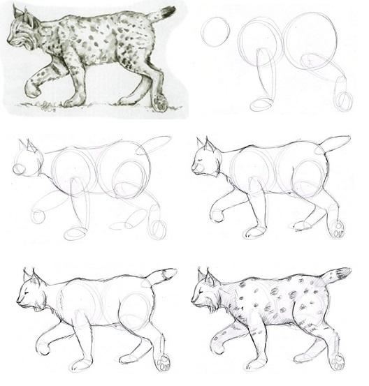 как-рисовать-рысь