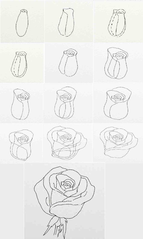 Как нарисовать розу своими руками поэтапно 76