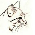Голова кота