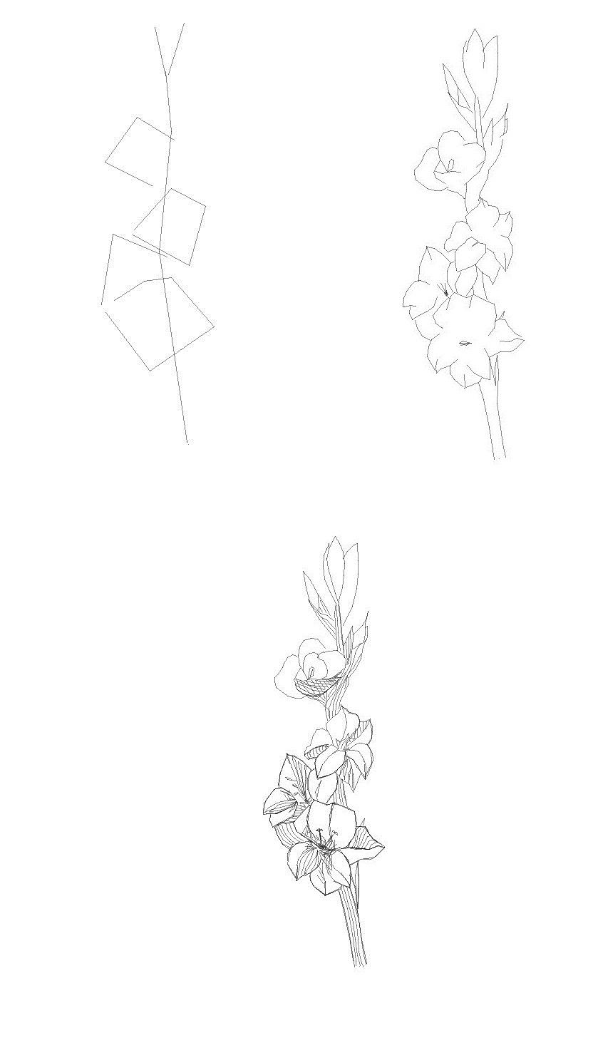 Как рисовать гладиолусb