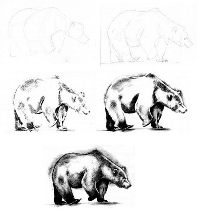 Как рисовать ведмедя