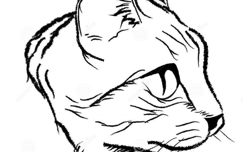 Как рисовать голову котов