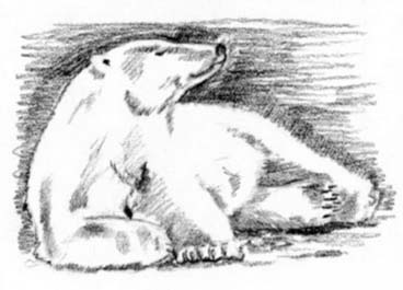 как нарисовать лежачего белого медведя