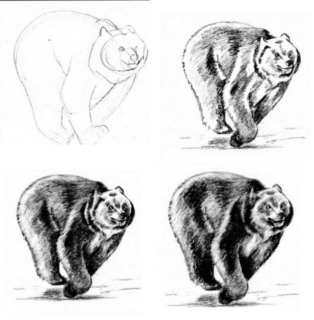 нарисовать медведя