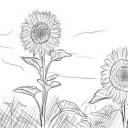 Как-нарисовать-подсолнух-карандашом-поэтапно-4-470x352