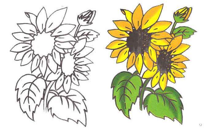Как рисовать подсолнух